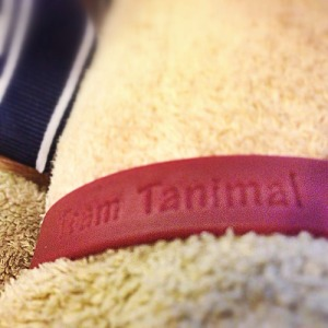 Team Tanimal | Ann Ning Learning How