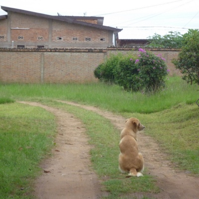 [Burundi March 2011] Pippin, the family dog.